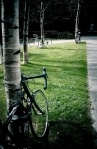 "A recent request from University faciliites asked for innovative ideas for bike racks.  I say, ""More Trees!"""
